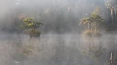 Like a Dream (Wim Boon Fotografie) Tags: sfeer wimboon mood reflectie reflections canoneos5dmarkiii leefilternd09softgrad leelandscapepolariser brabant koud mist nevel dew canonef70200mmf4lisusm oisterwijksebossenenvennen bos wood water