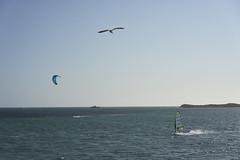 Coast #2 (Stueyman) Tags: sony alpha a7 a7ii wa au zeiss sky westernaustralia rockingham perth za 55mm bird water ocean sea indianocean kitesurfer windsurfer coast