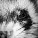 Lovely ferret