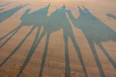 10003403.jpg (KevinAirs) Tags: shadows camels kevinairs ocean camel travel westernaustralia ©kevinairswwwkaozcomau sand sky landscape landscapes beach australia sea