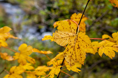 Fall Colours (Clif Budden) Tags: 2018 bowringpark canada environment nl nature newfoundland october outdoors stjohns