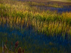 Marsh Rainbow (Professor Bop) Tags: professorbop drjazz olympusem1 branfordconnecticut connecticut connecticutshoreline stonycreek marsh marshland reeds color nature