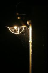 IMG_9265 (giltay) Tags: takumarsmc55mmf18 night light spiders spiderweb orbweaver