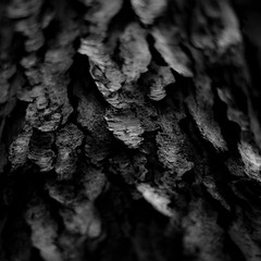 Quiet Corners 006 (noahbw) Tags: d5000 dof nikon sedgemeadowforestpreserve abstract blackwhite blackandwhite blur bw depthoffield forest monochrome natural noahbw quiet square still stillness summer treebark treetrunk trees woods