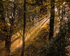Autumn (Northern Kev) Tags: autumn woodland trees sun beams nikon d7200 nikond7200 northumberland northeast leaves