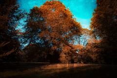 Autumn 🍂 (Julie Greg) Tags: autumn autumn2018 nature nautre park colours texture tree trees leafs canon sky