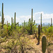 2018 Southwest US-214-Saguaro NP AZ