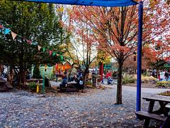 benches and trees (SetsuntaMew) Tags: parenfaire renfaire faire festival pennsylvania pa fall autumn