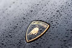 Lamborghini Gallardo LP560-4 (S C) Tags: lamborghini logo sportscar lp5604