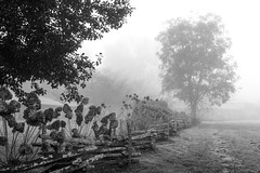 Fence Line with Tree B&W version (Neal3K) Tags: georgia northgeorgia fog dillardga trees landscape