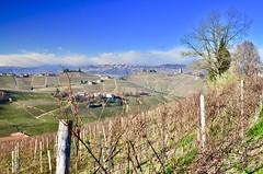 Vicinity of Guarane (Waldek P.) Tags: italy langhe piemonte włochy piemont wino wine vineyard winnica barolo nebiolo muscat