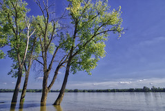 High Water on the Ohio River (dougbank) Tags: water illinois kentucky river outdoors outside bluesky trees travel horizontal hdr aurorahdr landscape landscapes artsy