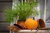 Fall harvest (kwtracyghostship) Tags: ligonierdays2018 kwtracyghostship commonwealthpa westernpa laurelhighlands ligonier pennsylvania unitedstates us pumpkin harvest fall whimsical country decor orange fun