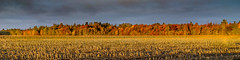 Île d'Orléans, Québec, Canada (Tasmanian58) Tags: landscape sunrise autumn fall leaves colors field forest country farm culture loxia loxia35 zeiss 35mm 235mm sony a7ii canada orleans island quebec