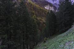 A7206262 (rickwarner) Tags: weissbad appenzellinnerrhoden switzerland ch