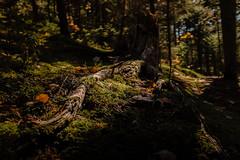 winterriveroct18-262-9 (carrieellengregory) Tags: 2018 autumn carriegregoryphotography fall october pei winterriver