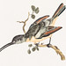 Hummingbird (1688-1698) by Johan Teyler (1648-1709)  Original from the Rijks Museum