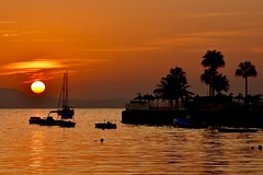 Here comes the sun (Nige H (Thanks for 15m views)) Tags: nature landscape seascape sunrise dawn sea meditteranean silhouette majorca palmanova palmtrees boats orange sun sky cloud