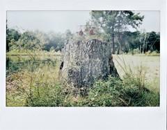 Shot at Stump (M Photographs) Tags: scanned fuji instax wide 300 mp280 stump tree target nikkorstax