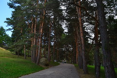 Pine turning alley (МирославСтаменов) Tags: russia caucasus kislovodsk alley slope mountain pinery park