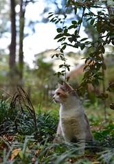 Gracie Jo with neighborhood backdrop (rootcrop54) Tags: graciejo neighbor neighbors female dilute calico bokeh neko macska kedi 猫 kočka kissa γάτα köttur kucing gatto 고양이 kaķis katė katt katze katzen kot кошка mačka gatos maček kitteh chat ネコ