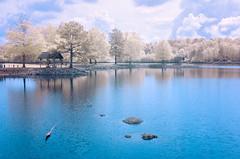 Weird Look (Neal3K) Tags: ndviinfraredfilter kolarivisionmodifiedcamera ir infrared lake