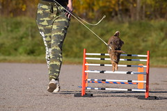 DSC_0098 (klawerjanina) Tags: bunnyjump bunny kani kaniestekisat kanin kaninhoppning