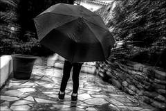 Un parapluie sur deux p'tites jambes! / An umbrella on two small legs! (vedebe) Tags: pluie enfant noiretblanc netb nb bw monochrome street rue ville city