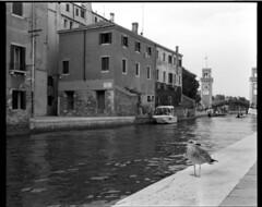 Gabbiano a Venezia (filippobartolucci) Tags: rb67 90mm f39 kodak trix 400 mamiya film filmphotography venezia venice blackandwhite blancetnoir bw biancoenero analog analogico italia water