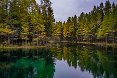 Kitch-iti-kipi (Big Springs) (Epperly Photographic Images) Tags: spring water clear nature trees reflections landscape michigan nikon d800e