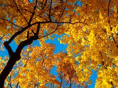 PA140584 (banagher_links) Tags: olympus omd em10 mark iii autumn russia moscow mft micro 43 юпитер8 jupiter8