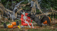 """You are looking a bit peckish!"" (hey its k) Tags: 2018 backyard halloween skeleton squirrels hamilton ontario canada ca img8231e chair canon6d inexplore"