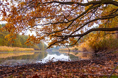 Autumn at the old Elbe (Volker Bartz) Tags: autumn herbst elbe fluss river wasser baum tree ufer wald wood color mood laub laubfärbung nikon d7500 landscape magdeburg sachsenanhalt germany deutschland oldelbe kreuzhorstmagdeburg
