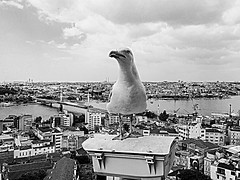 Istanbul | Turkey (maryduniants) Tags: istanbul viewfromgalatatower whitegull seagull turkey inexplore white black blackandwhite seabird sea summer bird gull laridae