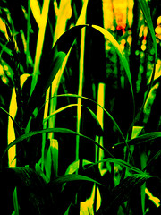 The Tall Grass (Steve Taylor (Photography)) Tags: digitalart black red green yellow contrast closeup newzealand nz southisland canterbury christchurch grass bokeh