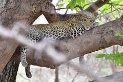 Sud Lugangwa, Zambie