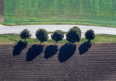Trees In A Row - 07 (Aerial Photography) Tags: by la ndb 01101991 010100136 baum baumreihe bavaria bayern braun buchaerlbach bäume deutschland farbe fotoklausleidorfwwwleidorfde fotoklausleidorfwwwleidorfaerialcom fünf germany grafik grau grün landscapeandnature landschaft landschaftnatur laubbaum luftaufnahme luftbild niedererlbach p1 region reihe aerial alignment brown color colour deciduoustree five foliagetree graphicart graphics green grey landscape landscapenature leaftree line lineoftrees nature outdoor row rowoftrees tree trees verde buchaerlbachlkrlandshut bayernbavaria deutschlandgermany deu