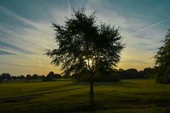 Sunrise (andrewmclean32) Tags: sunrise sun tree trees park morning silhouette vibrant colour peaceful walking nature bristol landscape