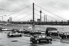 Düsseldorf - Rhein III / sw (KL57Foto) Tags: 2017 düsseldorf düsseldorfgolzheim fluss germany gewässer golzheim herbst jahreszeitenundwetter kl57foto landschaften nrw natur nordrheinwestfalen november olympus penemp2 rhein rheinufer autumn sw bw schwarzweis blackwhite