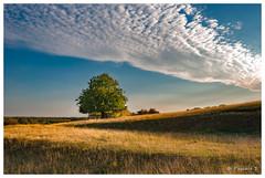 Ombres et lumière (Pascale_seg) Tags: paysage landscape automne autumn champ campagne country countryscape field moselle lorraine grandest france nikon sky nuages clouds cloudy nuageux ombre shadow lumière soir soirée