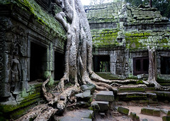 Ta Prohm temple overgrown with tree roots, Siem Reap Province, Angkor, Cambodia (Eric Lafforgue) Tags: abandoned ancientcivilisation angkor angkorwat apsara archaeology architecture artscultureandentertainment asia beautyinnature buddhism buddhist builtstructure cambodia colourimage environment famousplace history horizontal indochina khmer lush majestic monument nopeople oldruin outdoors rediscovered religion root ruin southeastasia spirituality temple templebuilding tetramelesnudiflora traditionallycambodian tranquility travel traveldestinations tree unescoworldheritagesite wat yasodharapura camboimg9655 siemreapprovince
