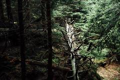 Harzer Waldimpression (Gruenewiese86) Tags: harz hütte hüttenübernachtung nebel regen wald waldlandschaft forest forst wipfel waldboden wurzeln naturschutz umweltschutz frisch ökosystem laubwald hoch hellgrün grün botanik baum öko idyllisch laub baumstamm umwelt froschperspektive äste sauerstoff naturwald sicht gros flora bergwald naturfoto naturpark baumwipfel landschaft blätter baumkrone urwald untersicht wälder stimmungsvoll drausen blatt zweige natur frische wurzelwerk holz tier park