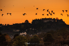 Sunset - 10 Oct 2018 - 58 (ibriphotos) Tags: sunshine autumn silhouette wallacemonument stirlingcastle stirling birds flight flock bluesky sunset indiansummer evening goldenhour sky sunsets