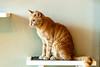 Javacats14Oct2018192.jpg