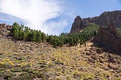 (Tenerife/Canaries/Espagne) (PierreG_09) Tags: tenerife canaries espagne spain españa canarias parquenacionaldelteide lascañadas volcan volcanique pindescanaries pin