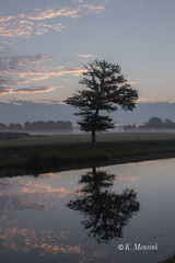 Lonley tree (katrinchen59) Tags: tree mirroring sky morningsky sunlight clouds landscape landscapephotography baum horizont wolken morgenhimmel landschaft landschaftsfotografie boom spiegeling landschap landschapsphotography natuur nature misty foggy nebel mistig