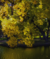 Etude #181009DSC7369. (ptrbsh30) Tags: digitalphoto digitalart park plants tree yellow impression