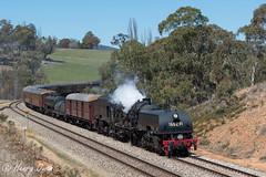 Quarry Curving (Henry's Railway Gallery) Tags: 6029 ad60class garratt steamlocomotive steamtrain heritagetrain thnsw transportheritagensw passengertrain 6s67 taranaquarry