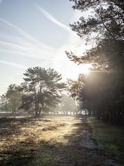 Bussumerheide 2018: Down the path (mdiepraam) Tags: bussumerheide 2018 bussum westerheide heath earlymorning dawn sunrise tree branch backlight