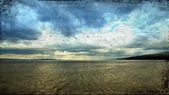 The Salish Sea (Chuck Pacific AKA Chuck Tofu) Tags: salishsea pugetsound washingtonstate washingtonstateferries ferryboat upperleftusa snapseed distressedfx distressedtextures hss happysliderssunday seascape explore